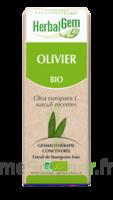 Herbalgem Olivier Macérat Bio 30ml à Voiron